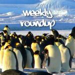 Weekly Roundup - Dec 6