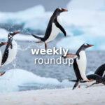 Weekly Roundup - Jan 24, 2021