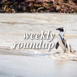 Weekly Roundup - Jan 3 2021