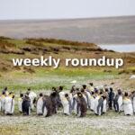 Weekly Roundup - Jan 17